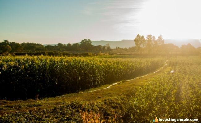 Best Farmland Investing Platforms featured image